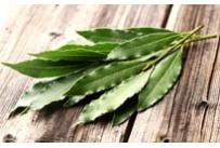 Eucalyptus Radiata Bio