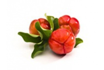 Acérola Vitamine C naturelle